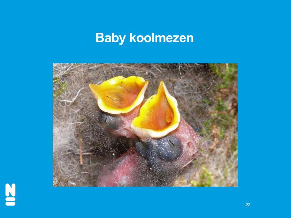 Baby koolmezen
