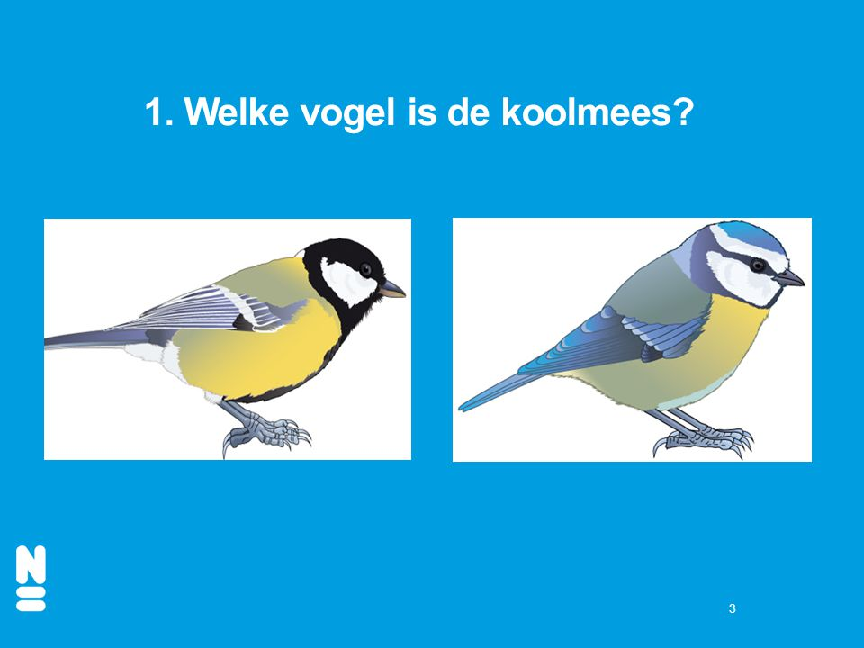 1. Welke vogel is de koolmees
