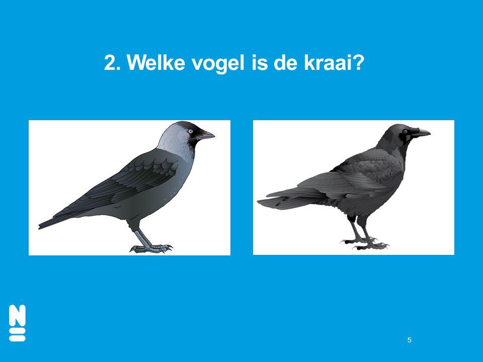 2. Welke vogel is de kraai