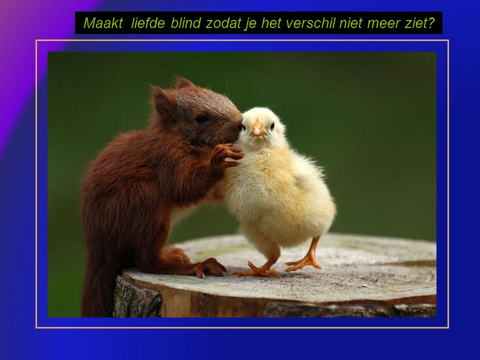 Maakt liefde blind zodat je het verschil niet meer ziet