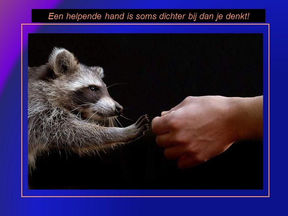 Een helpende hand is soms dichter bij dan je denkt!