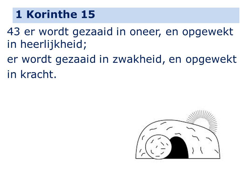 1 Korinthe 15 43 er wordt gezaaid in oneer, en opgewekt in heerlijkheid; er wordt gezaaid in zwakheid, en opgewekt.
