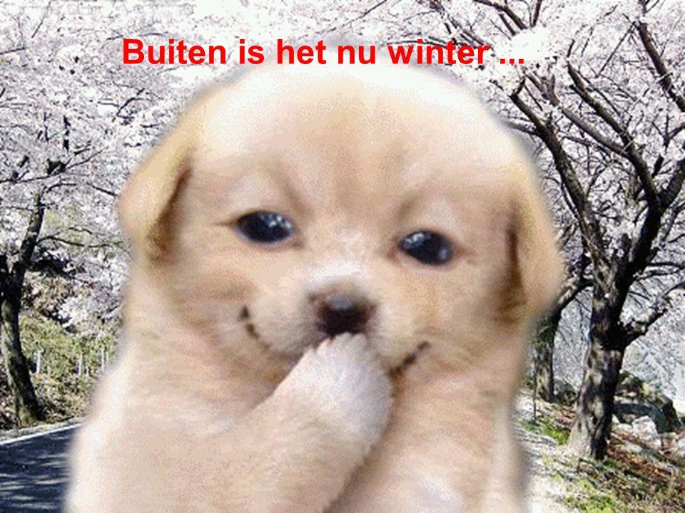 Buiten is het nu winter ...