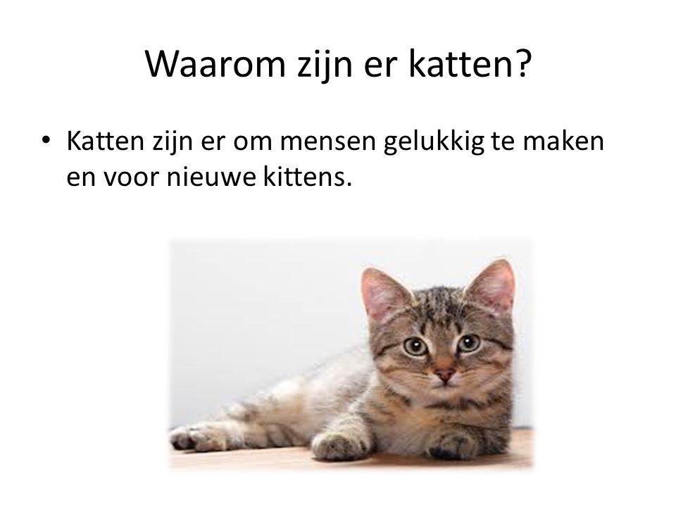Waarom zijn er katten Katten zijn er om mensen gelukkig te maken en voor nieuwe kittens.