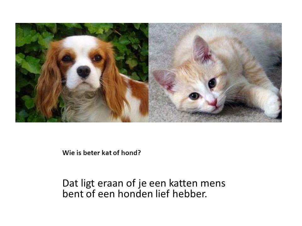 Dat ligt eraan of je een katten mens bent of een honden lief hebber.