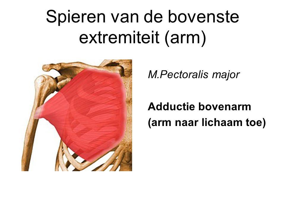 Spieren van de bovenste extremiteit (arm)