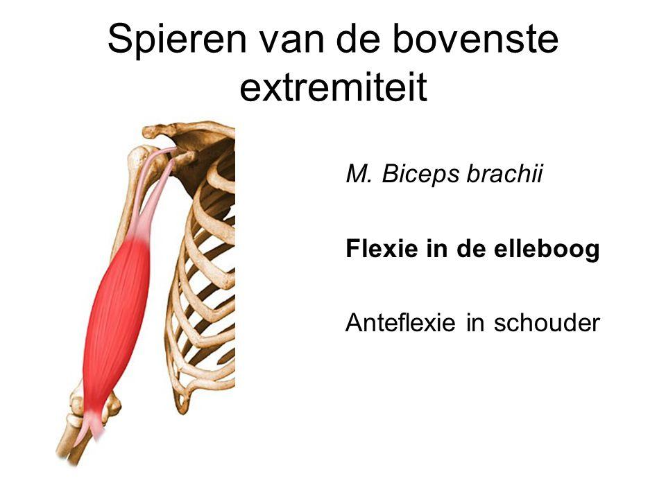 Spieren van de bovenste extremiteit