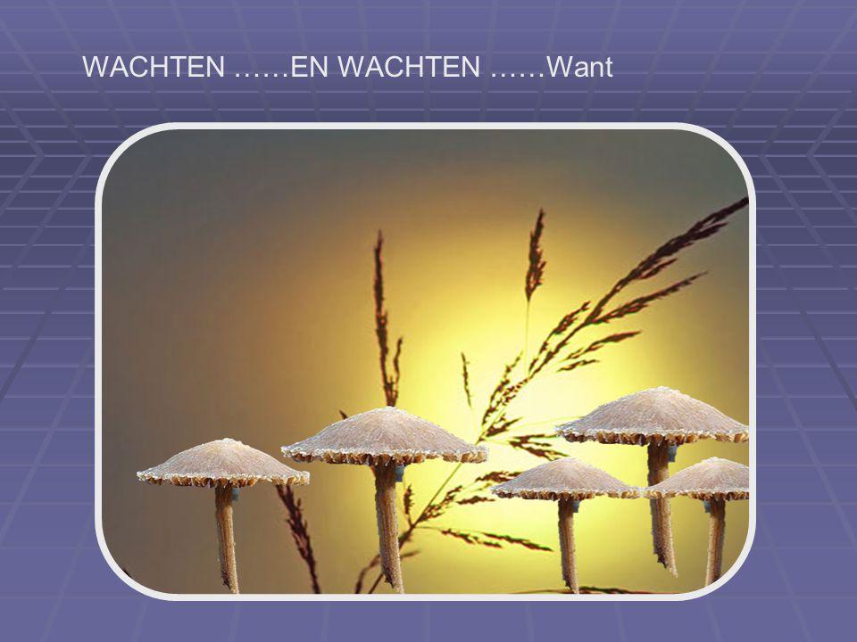 WACHTEN ……EN WACHTEN ……Want