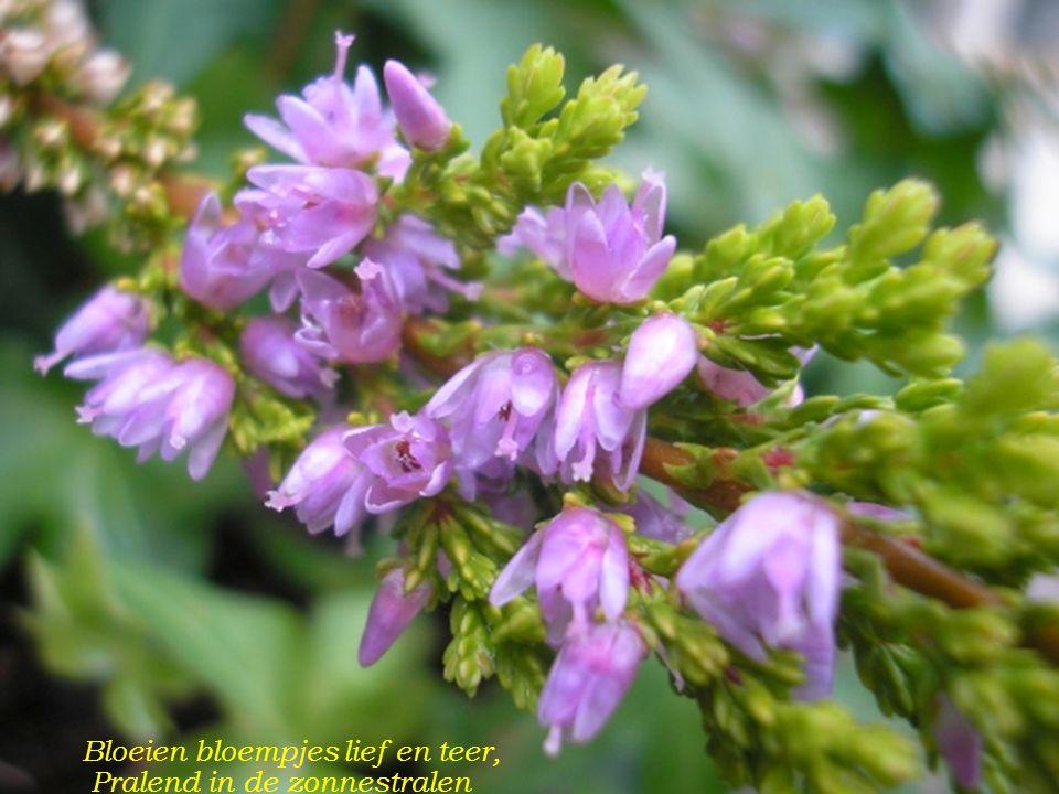 Bloeien bloempjes lief en teer,