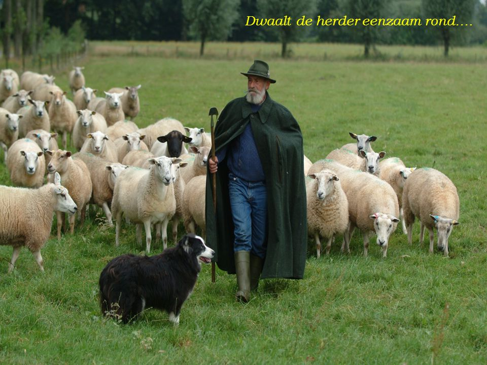 Dwaalt de herder eenzaam rond….