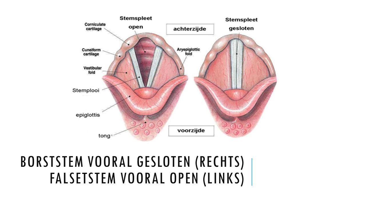 Borststem vooral gesloten (rechts) Falsetstem vooral open (links)