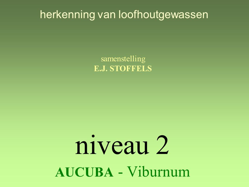 niveau 2 AUCUBA - Viburnum