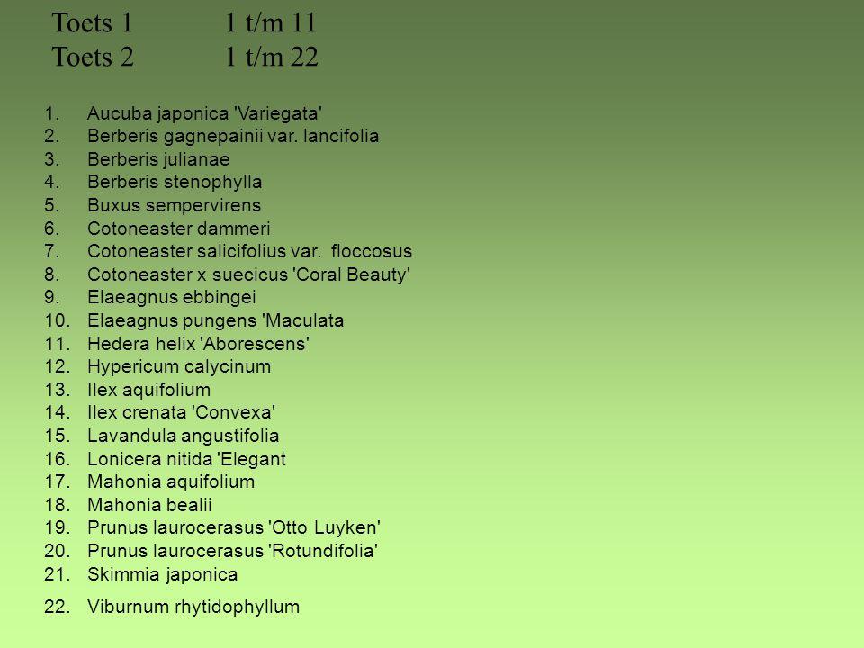 Toets 1 1 t/m 11 Toets 2 1 t/m 22 Aucuba japonica Variegata