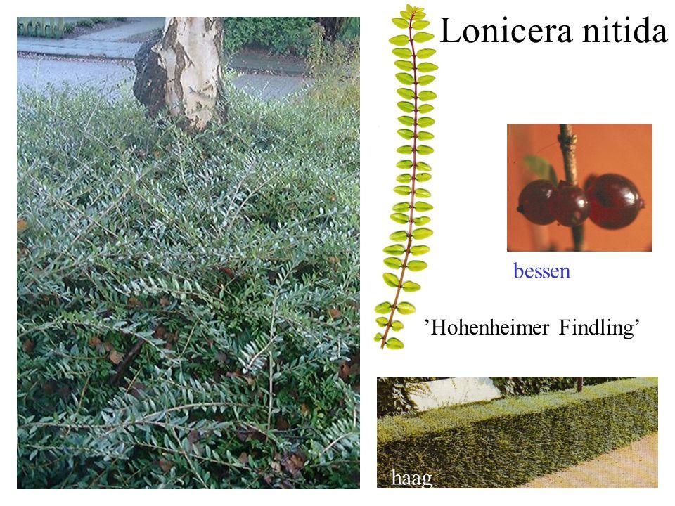 'Hohenheimer Findling'