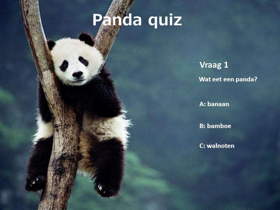 Panda quiz Vraag 1 Wat eet een panda A: banaan B: bamboe C: walnoten