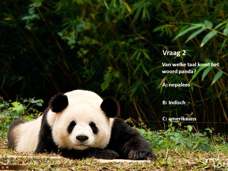 Vraag 2 Van welke taal komt het woord panda A: nepalees B: Indisch