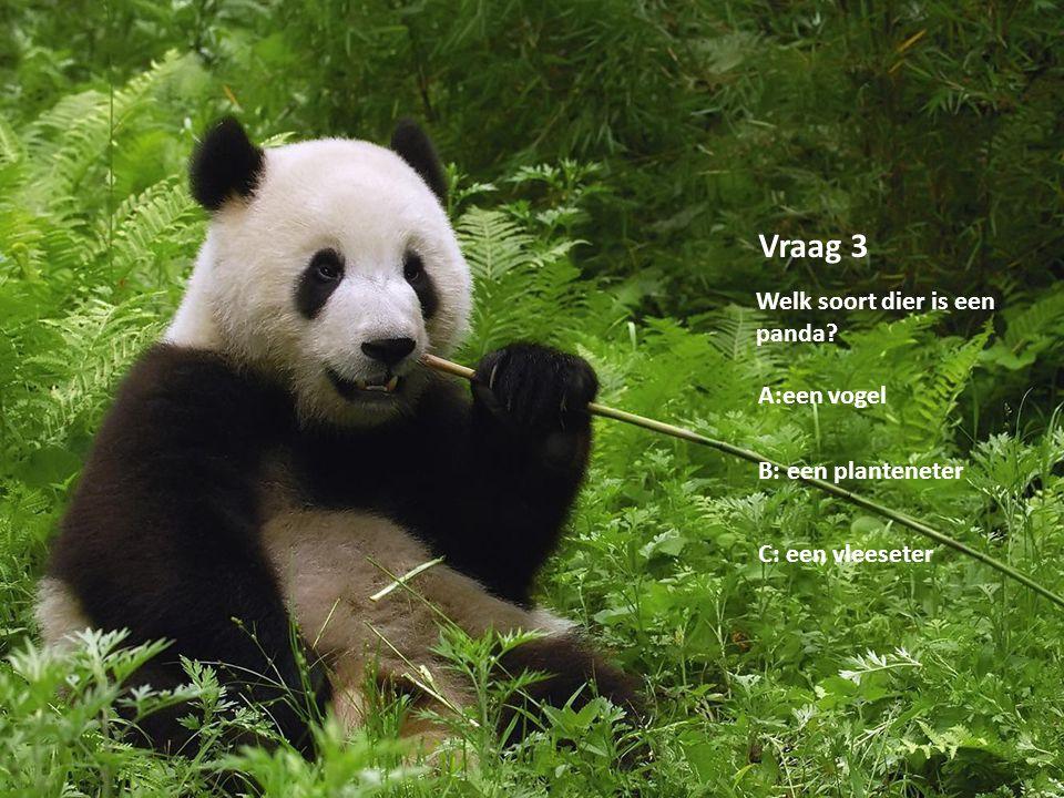 Vraag 3 Welk soort dier is een panda A:een vogel B: een planteneter