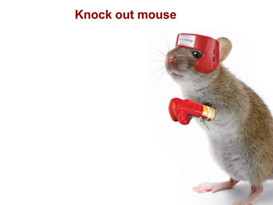 Knock out mouse