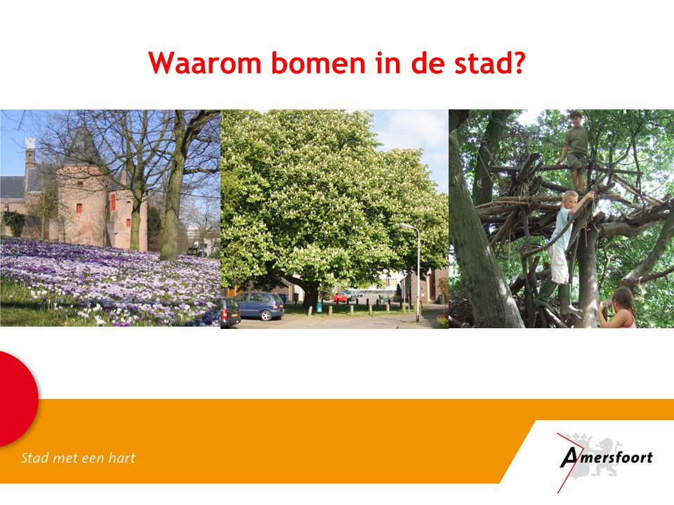 Waarom bomen in de stad