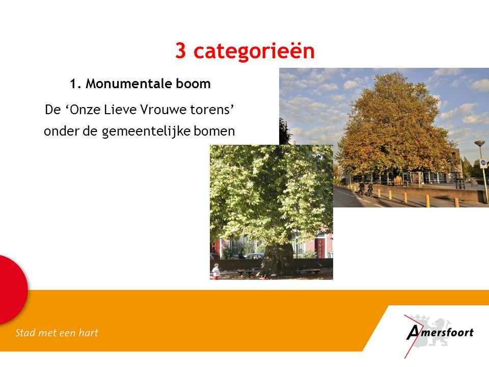 3 categorieën 1. Monumentale boom De 'Onze Lieve Vrouwe torens'