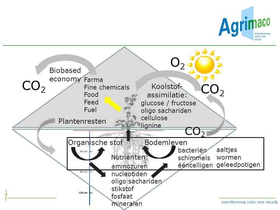 Koolstof-assimilatie: