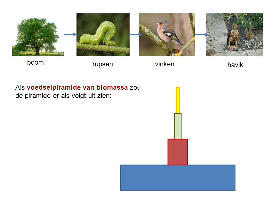 boom rupsen vinken havik Als voedselpiramide van biomassa zou de piramide er als volgt uit zien: