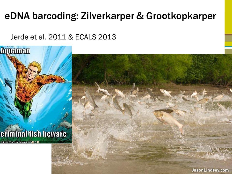 eDNA barcoding: Zilverkarper & Grootkopkarper