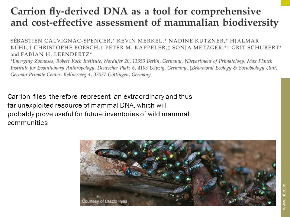 Carrion flies therefore represent an extraordinary and thus far unexploited resource of mammal DNA, which will probably prove useful for future inventories of wild mammal communities
