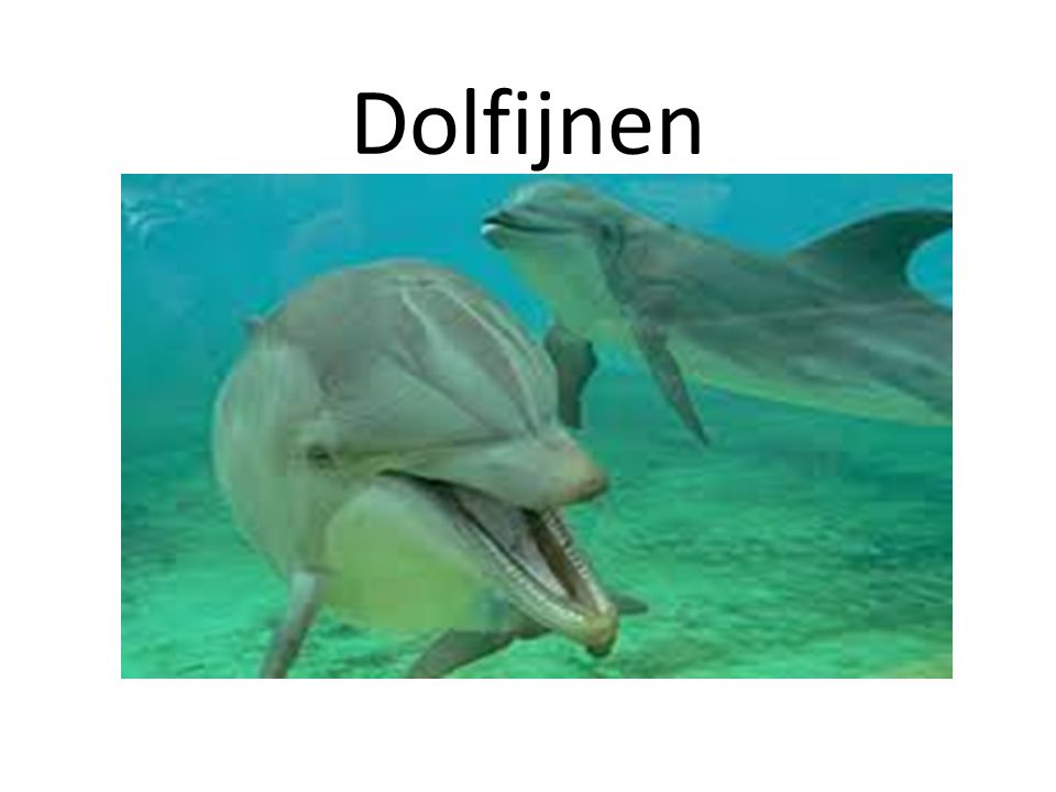 Dolfijnen Hoofdstuk 1 Algemeen
