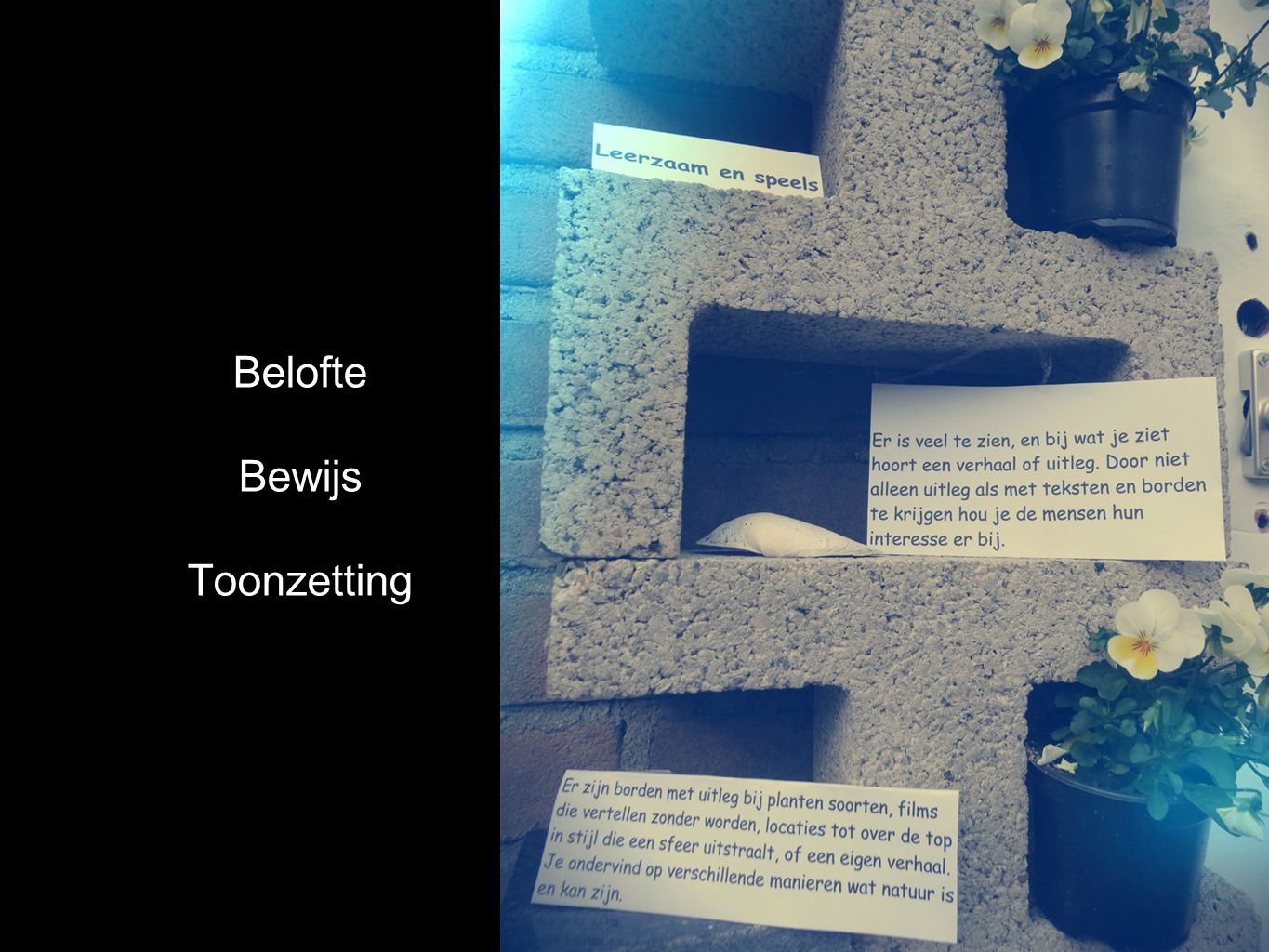 Belofte Bewijs Toonzetting