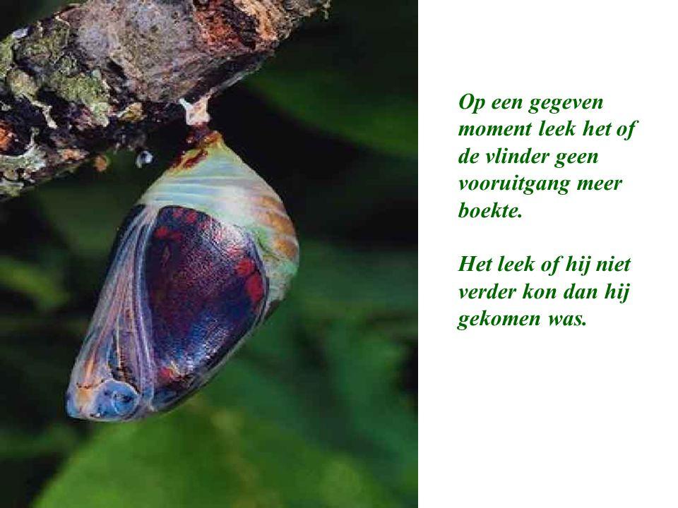 Op een gegeven moment leek het of de vlinder geen vooruitgang meer boekte.