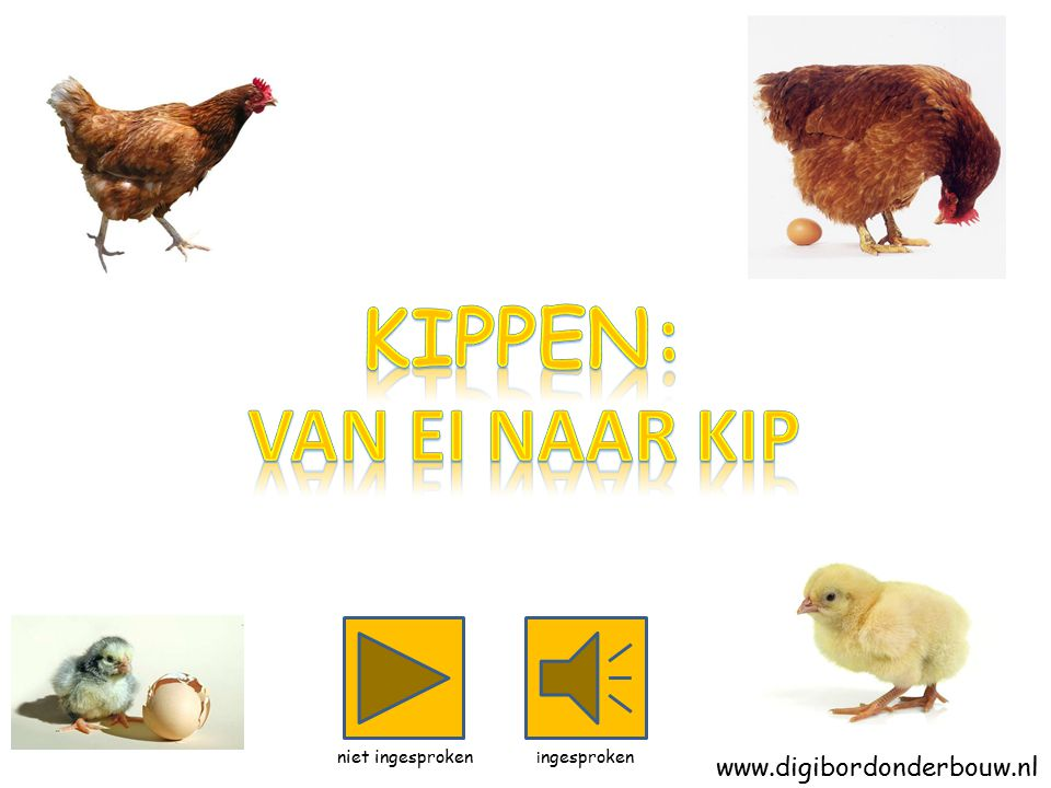 Kippen: Van ei naar kip www.digibordonderbouw.nl niet ingesproken