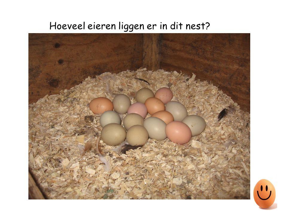 Hoeveel eieren liggen er in dit nest