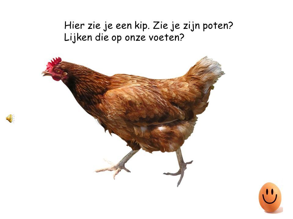 Hier zie je een kip. Zie je zijn poten