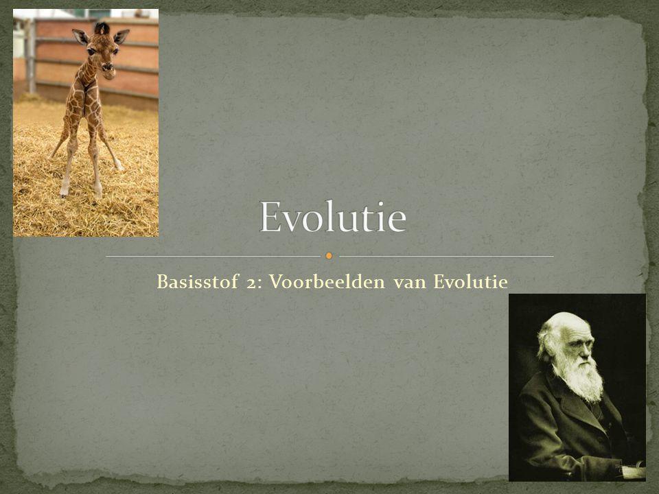 Basisstof 2: Voorbeelden van Evolutie