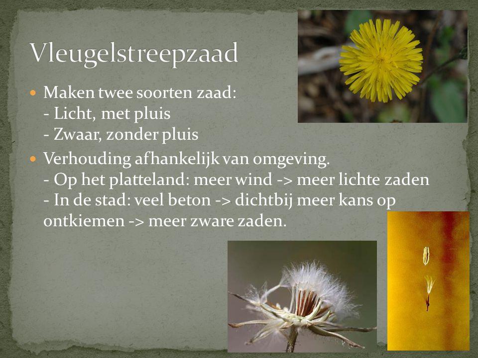 Vleugelstreepzaad Maken twee soorten zaad: - Licht, met pluis - Zwaar, zonder pluis.