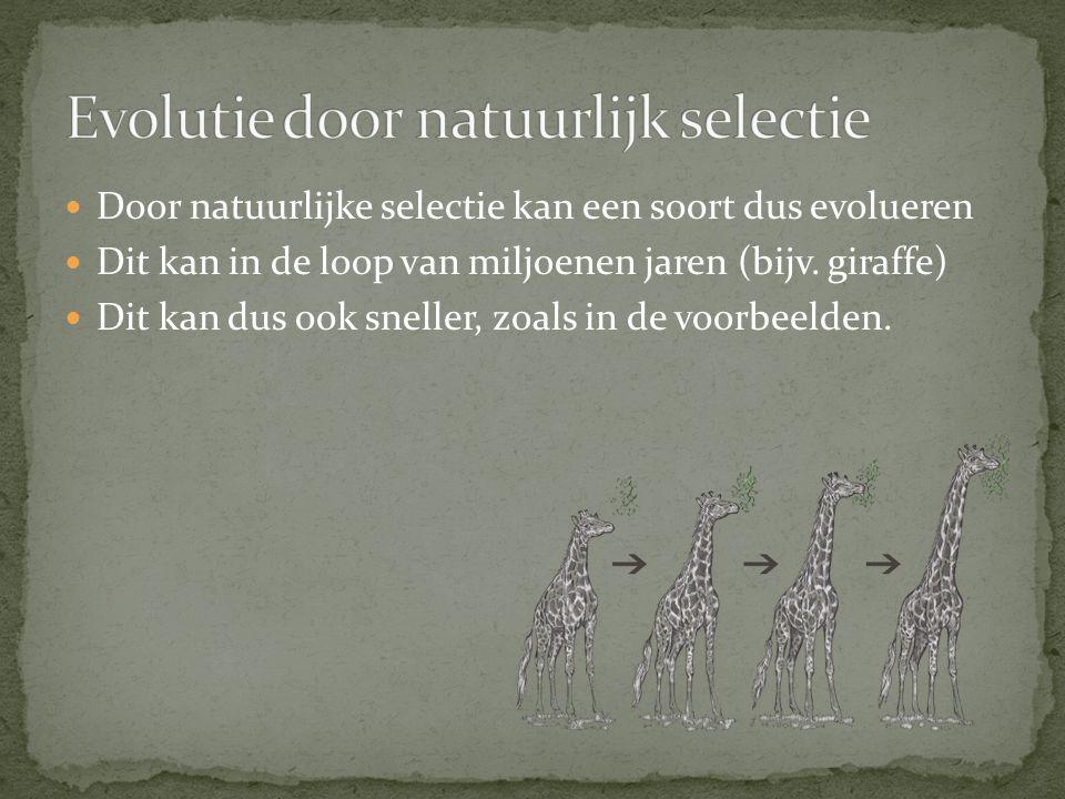 Evolutie door natuurlijk selectie