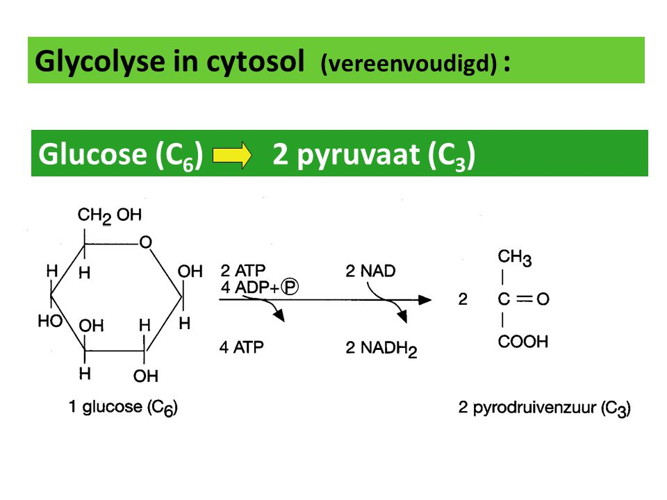 Glycolyse in cytosol (vereenvoudigd) :