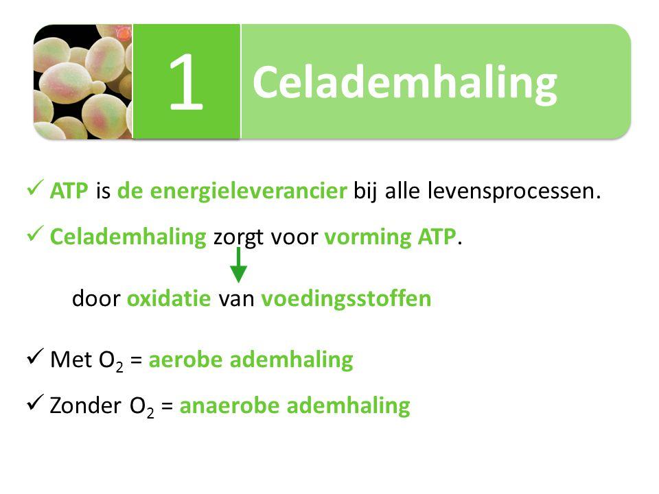 1 Celademhaling ATP is de energieleverancier bij alle levensprocessen.