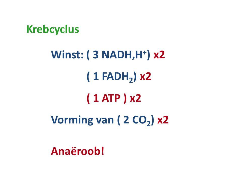 Krebcyclus Winst: ( 3 NADH,H+) x2 ( 1 FADH2) x2 ( 1 ATP ) x2 Vorming van ( 2 CO2) x2 Anaëroob!