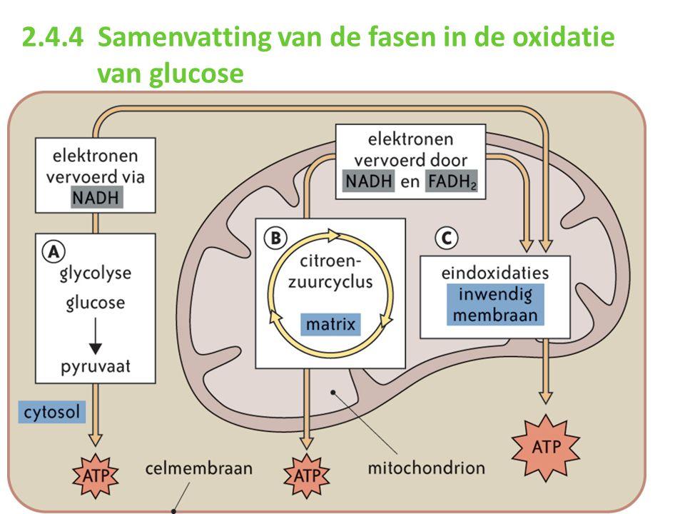 2.4.4 Samenvatting van de fasen in de oxidatie