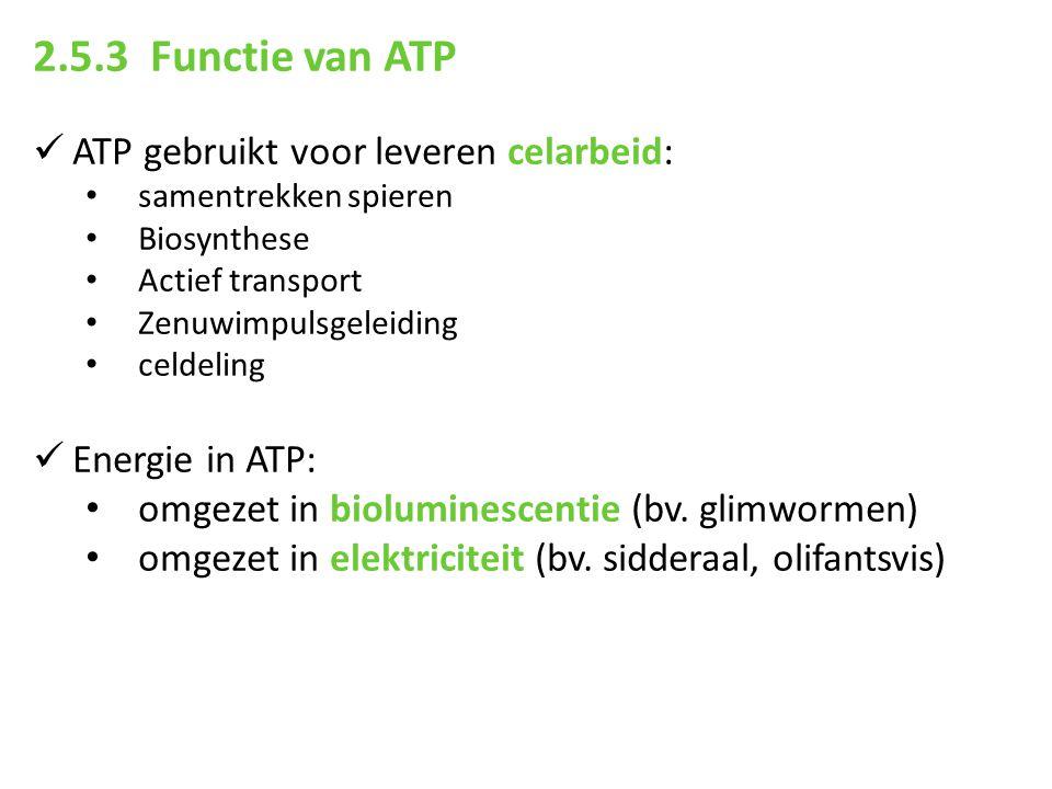 2.5.3 Functie van ATP ATP gebruikt voor leveren celarbeid: