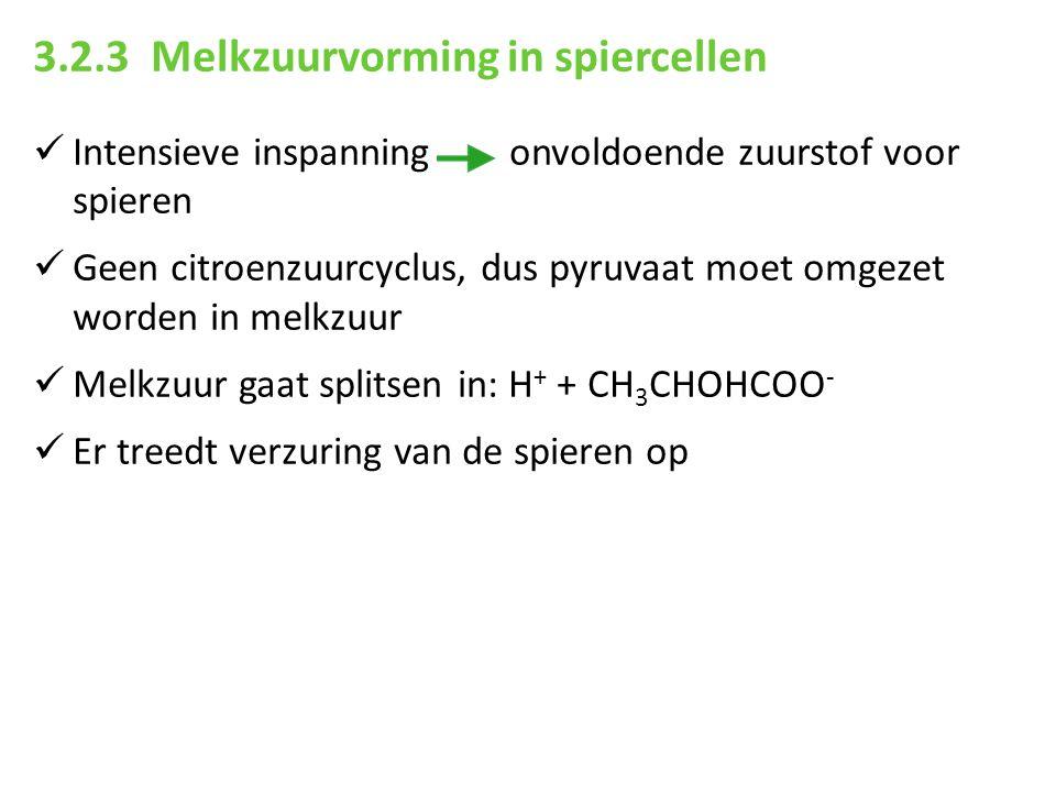 3.2.3 Melkzuurvorming in spiercellen