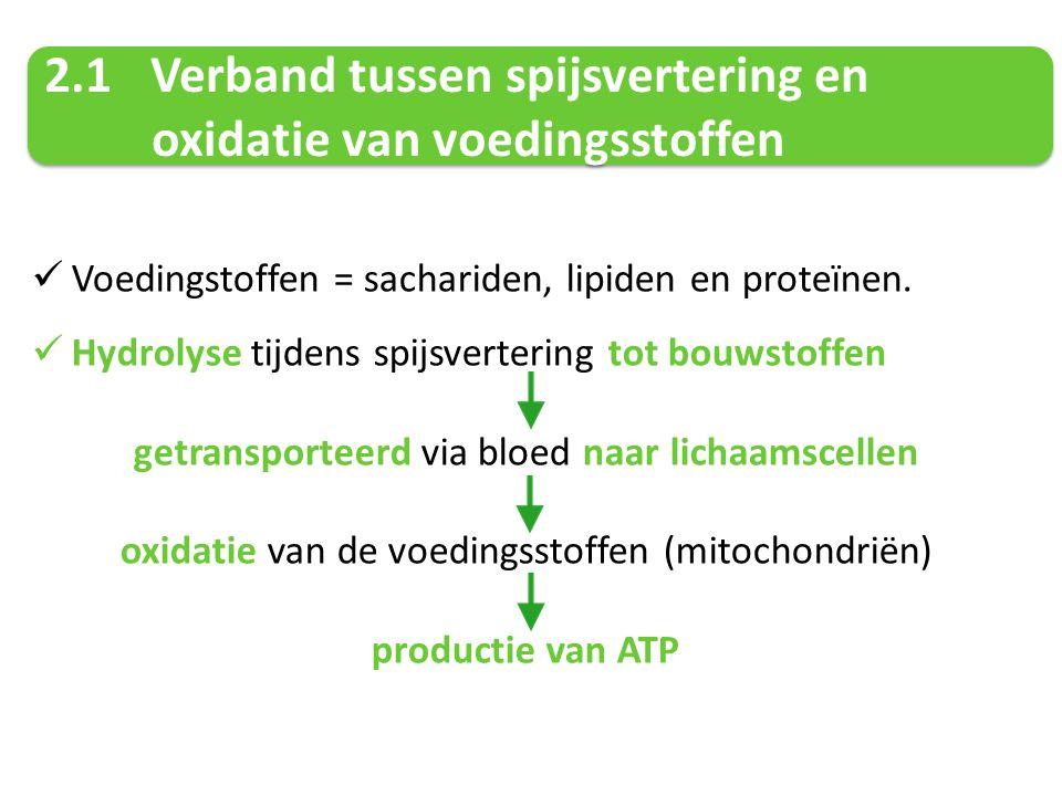 2.1 Verband tussen spijsvertering en oxidatie van voedingsstoffen