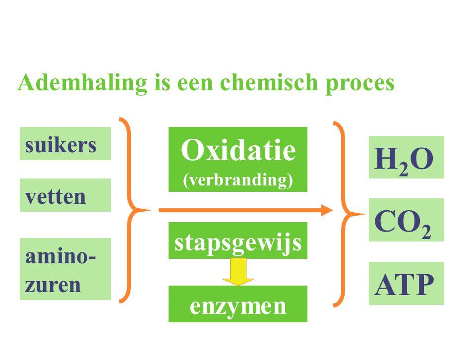 Oxidatie (verbranding)