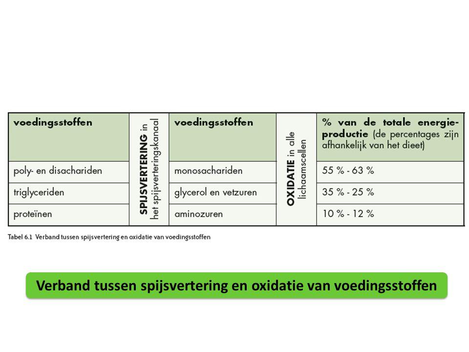 Verband tussen spijsvertering en oxidatie van voedingsstoffen