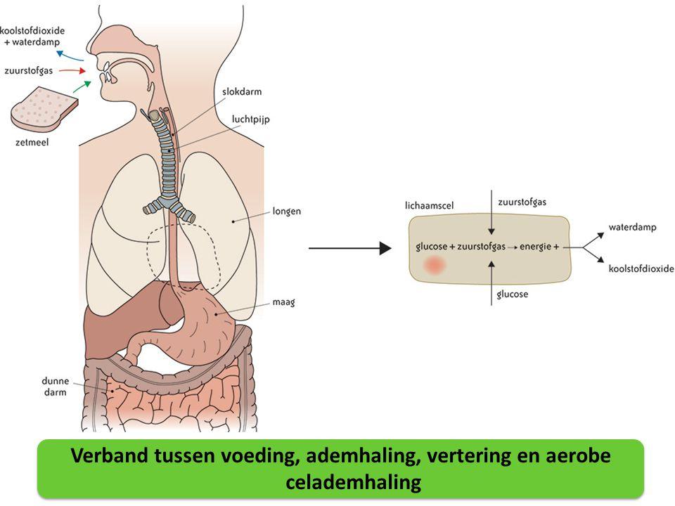 crepitaties longen betekenis