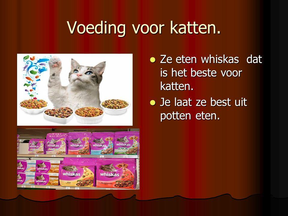 Voeding voor katten. Ze eten whiskas dat is het beste voor katten.