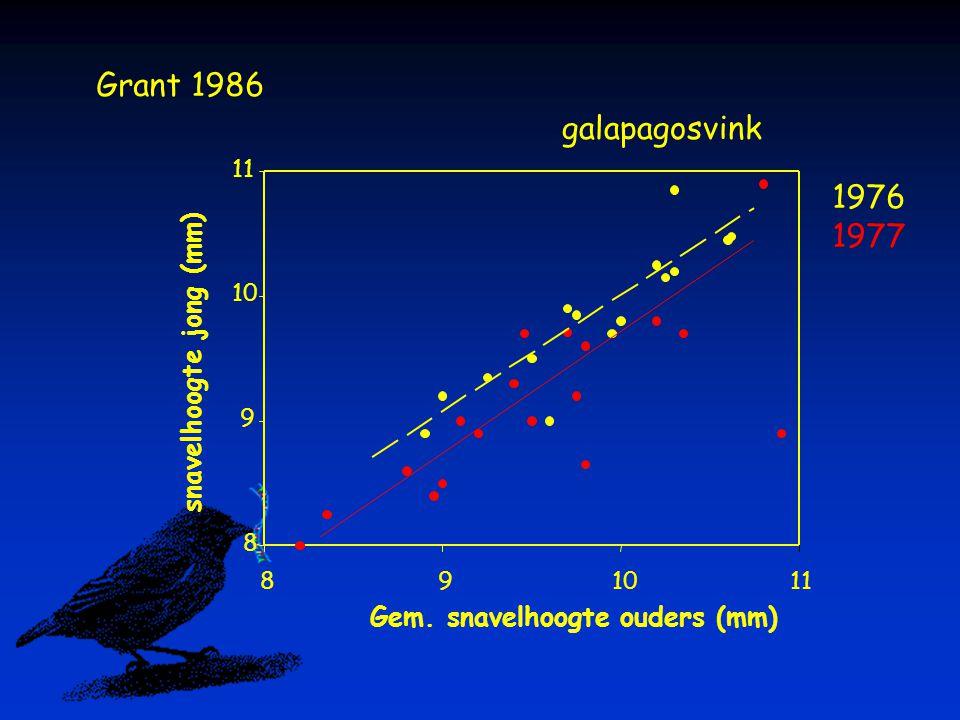 Grant 1986 galapagosvink 1976 1977 snavelhoogte jong (mm)