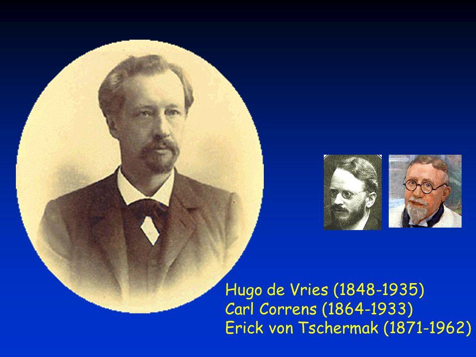 Erick von Tschermak (1871-1962)